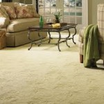 carpet cleaner in michigan