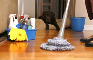 carpet cleaning services in pontiac